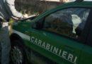 La Corte Costituzionale ha deciso che l'assorbimento della Forestale nell'Arma dei carabinieri è legittimo