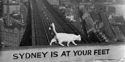 gatto-sydney