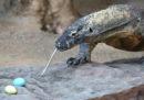 Dal 2020 l'isola di Komodo sarà temporaneamente chiusa ai turisti per proteggere i varani