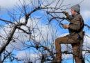 La misteriosa malattia che sta uccidendo i meli negli Stati Uniti