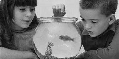 "Cos'è il ""pesce d'aprile"""