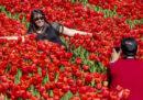 Farsi i selfie nei campi di tulipani non è una grande idea
