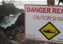 Un surfista è stato ucciso da uno squalo al largo dell'isola Riunione