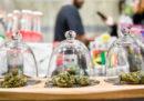 E ora cosa succede ai negozi di cannabis light?