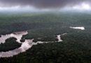 In Gabon c'è uno scandalo sul legno