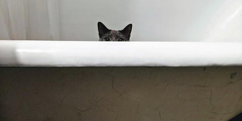 La Scienza Dei Gatti Il Post