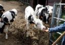 Si vendono sempre più latticini senza lattosio
