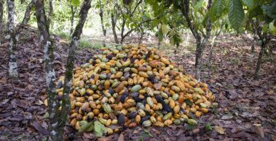 Abbiamo evitato una crisi del cacao