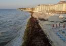 Le foto delle spiagge dei Caraibi messicani piene di alghe