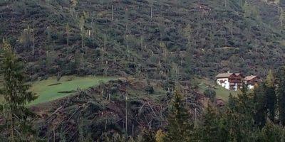 Come sono messe le foreste delle Dolomiti