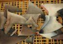 Il Canada ha vietato l'importazione e la vendita di pinne di squalo