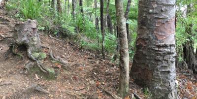 Esistono alberi zombie, più o meno