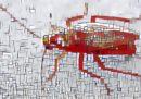 Gli scarafaggi diventano sempre più resistenti agli insetticidi