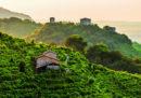 Colline del Prosecco di Conegliano e Valdobbiadene, Italia