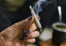 Un bilancio a cinque anni dalla legalizzazione della marijuana in Uruguay