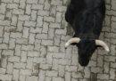 Un uomo è morto mentre partecipava alla corsa dei tori di Cuéllar, in Spagna