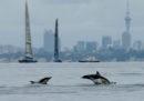 La Nuova Zelanda ha vietato alle persone di nuotare con i delfini tursiopi nellaBaia delle Isole