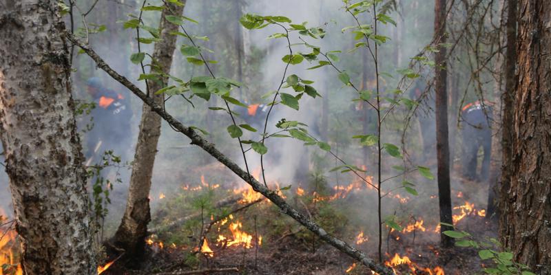 La Siberia è in fiamme, a fuoco un'area vasta come la Danimarca