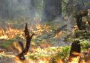 Ci sono incendi che fanno bene alle foreste