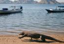 L'Indonesia vuole chiudere l'isola di Komodo ai turisti