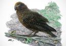 Il pappagallo più grande mai scoperto