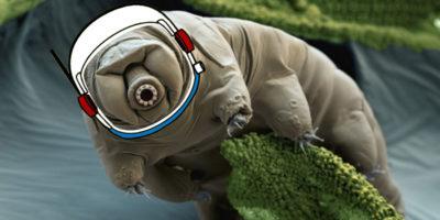 Abbiamo portato i tardigradi sulla Luna