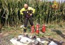 Un aereo ultraleggero è precipitato nella provincia di Venezia causando la morte di una persona