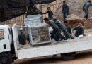 86 tigri sequestrate tre anni fa nel controverso Tempio delle Tigri in Thailandia sono morte