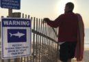 Cape Cod non sa come tenere lontani gli squali