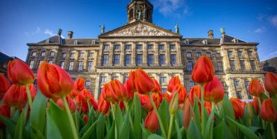 L'indagine sui tulipani che non sbocciano, nei Paesi Bassi