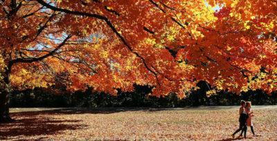 Il meglio dell'autunno