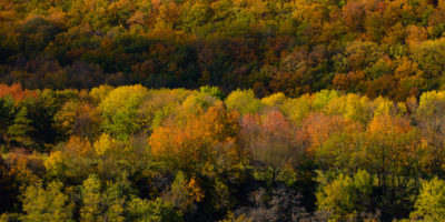 5 boschi da vedere in un weekend autunnale
