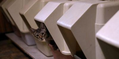 Il mercato della sabbietta per gatti