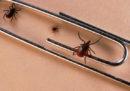 Riproveremo un vaccino contro la malattia di Lyme