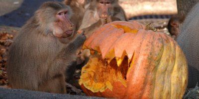 Stanotte è Halloween