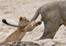 La foto che ha vinto il Comedy Wildlife Photography Awards