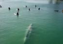 Com'è fare surf con una balenottera azzurra in California