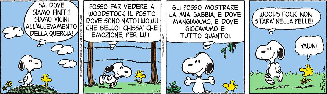 peanuts 21 novembre
