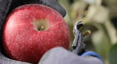 C'è una nuova mela