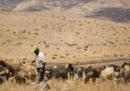 13 braccianti pakistani sono morti in un incendio in una fattoria in Giordania
