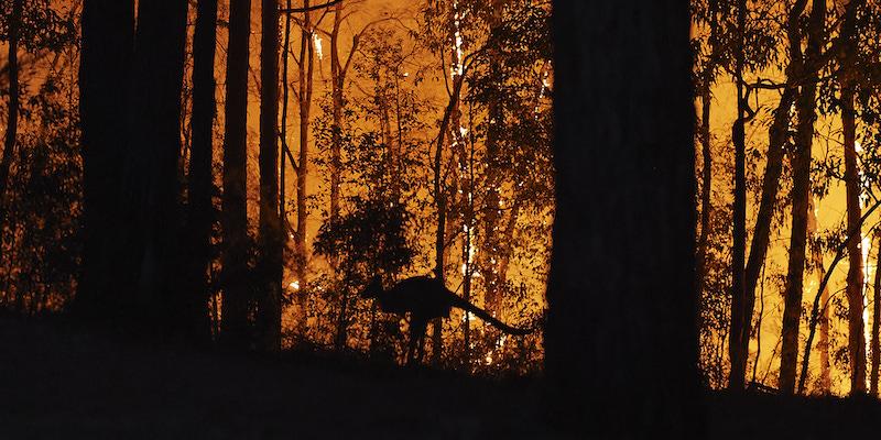 Quanti Animali Sono Morti Negli Incendi In Australia Il Post