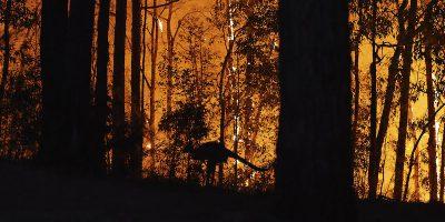 Perché gli incendi in Australia sono così grossi