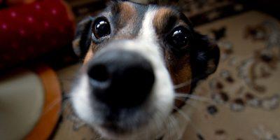 Come scegliere una telecamera per spiare cani e gatti soli in casa