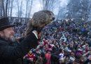 Oggi è il Giorno della marmotta