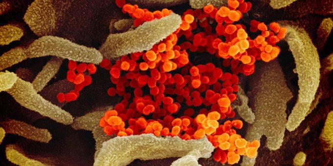 Come leggere i numeri sul nuovo coronavirus