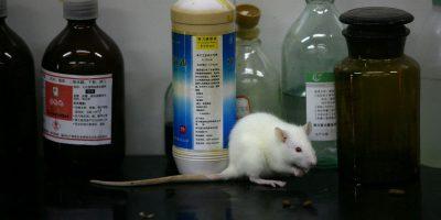 C'è un nuovo problema con la sperimentazione animale