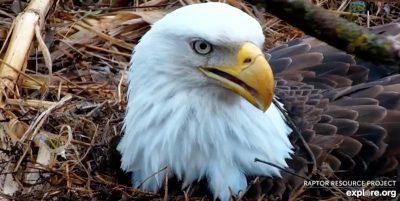 10 webcam di animali, per rilassarsi