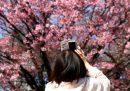 Le foto dei ciliegi in fiore in Giappone