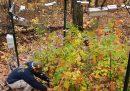 In Minnesota si aiutano gli alberi a migrare