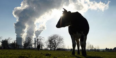 Forse abbiamo capito come ridurre le emissioni inquinanti dei bovini